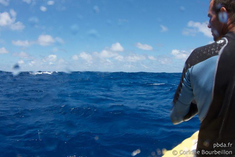 Maupiti. Rencontre avec une baleine. Polynésie, octobre 2012.