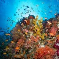 Exubérance de vie et de couleurs à Sardine Reef. (Raja Ampat, juillet 2016)
