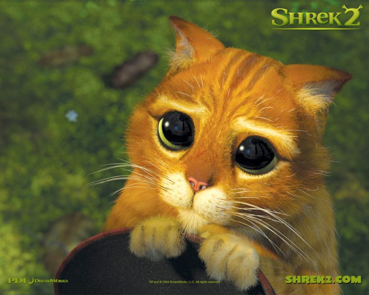 Le chat de Shrek.