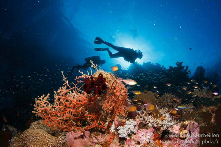 Plongée à Weda Bay. (Moluques, Halmahera, Indonésie, mars 2013)