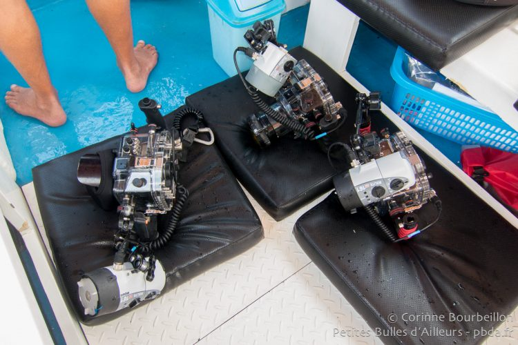 Our cameras ready to dive, in their Ikelite boxes. Halmahera, Indonesia. March 2013.