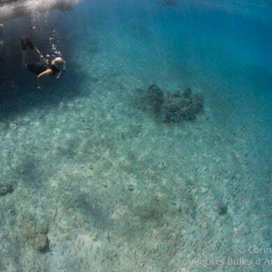 Snorkeling à Weda Bay. Halmahera, Indonésie. Mars 2013.