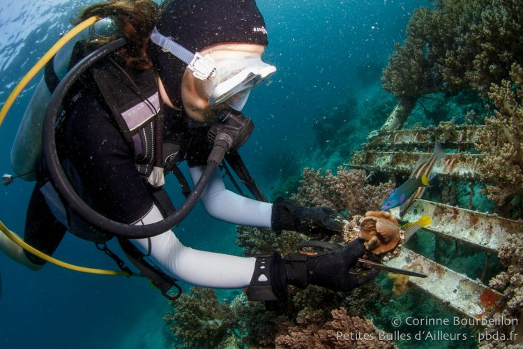 "Clara takes new ""cuttings"" of coral. Coral Eye, Bangka Island. Sulawesi, Indonesia. March 2013."