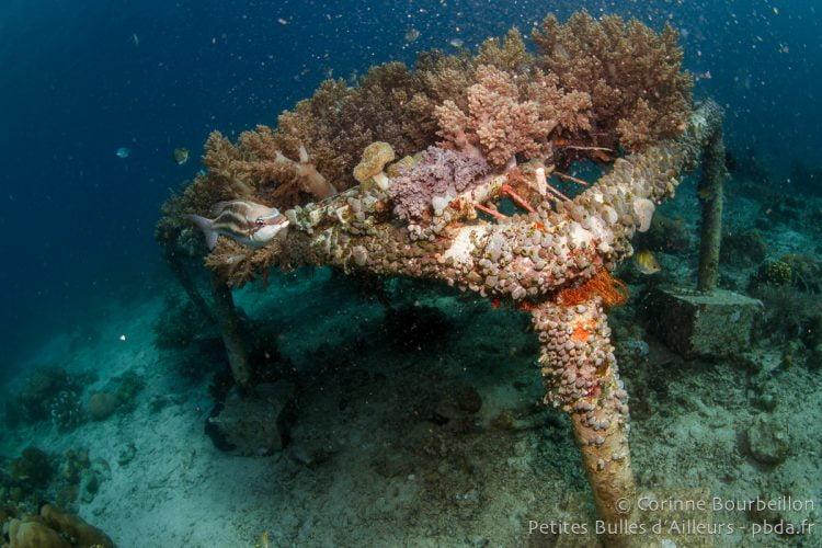 """Coral nursery"". Coral Eye, Bangka Island. Sulawesi, Indonesia. March 2013."