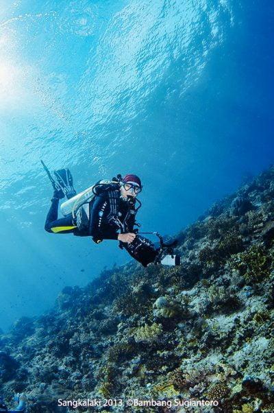 Sous l'eau à Sangalaki. Bornéo, Indonésie. Juillet 2009.