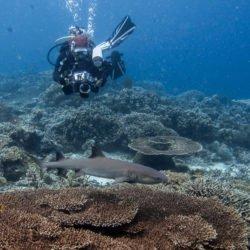 Shark in Sipadan. Borneo, Malaysia, July 2013.