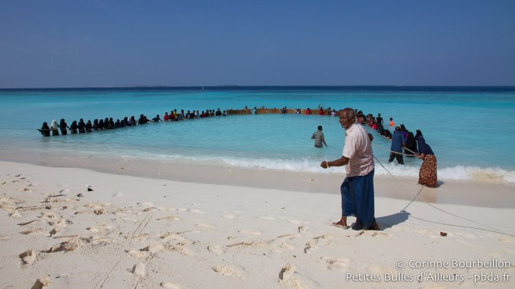 Traditional collective fishing in Utheemu. Maldives, February 2014.