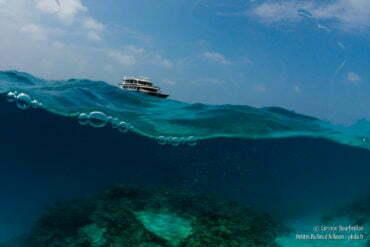 """Au loin, l'Ocean Divine, ma """"maison"""" pendant une semaine... (Maldives, février 2014)"""