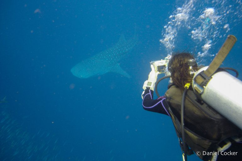 With a whale shark in Thailand, in 2006.