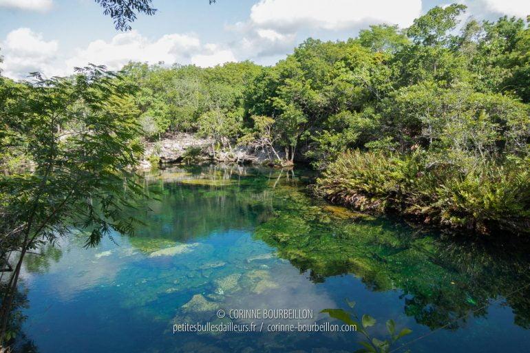 Cenote Ponderosa, appelé aussi le Jardin d'Eden... (Mexique, juillet 2014)