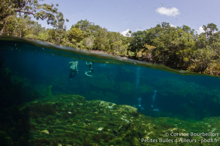 Cenote Ponderosa (Garden of Eden). Mexique, juillet 2014.