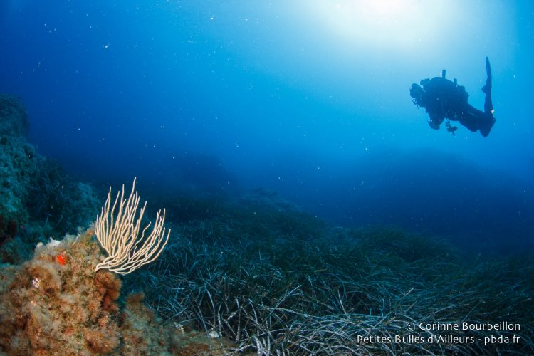 Diving in the Mediterranean. July 2014.