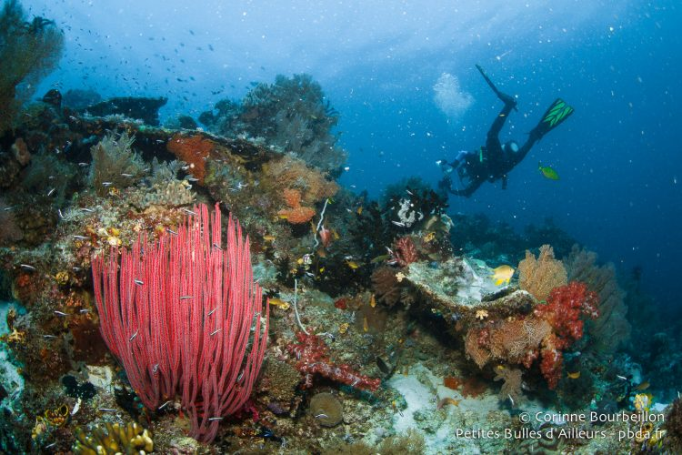 Underwater at Raja Ampat. West Papua, Indonesia, January 2015.
