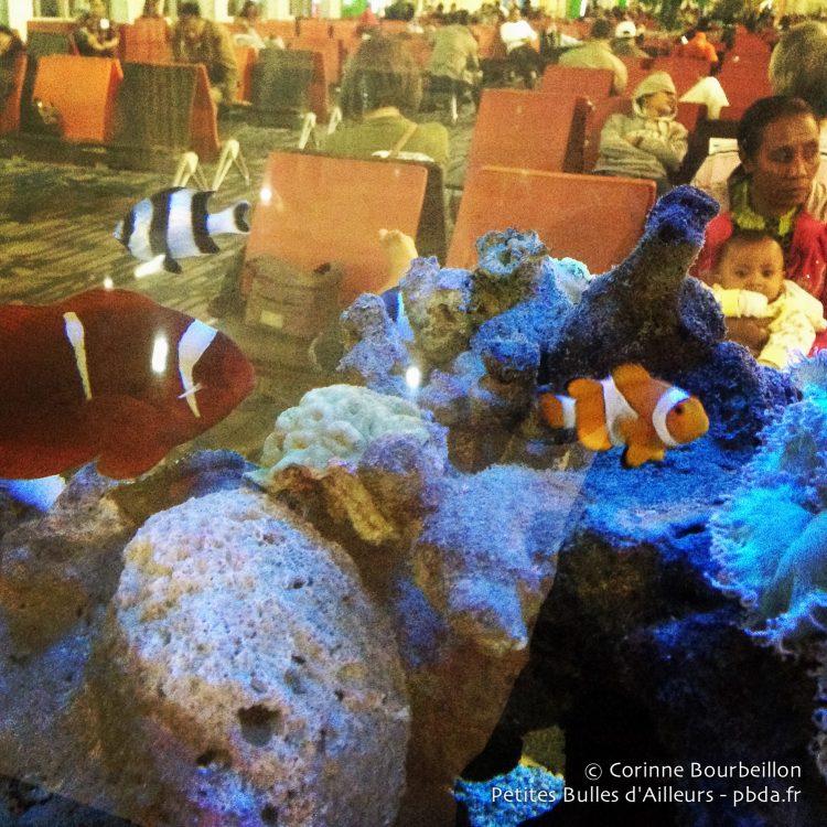 L'aquarium de l'aéroport de Makassar. Janvier 2015.