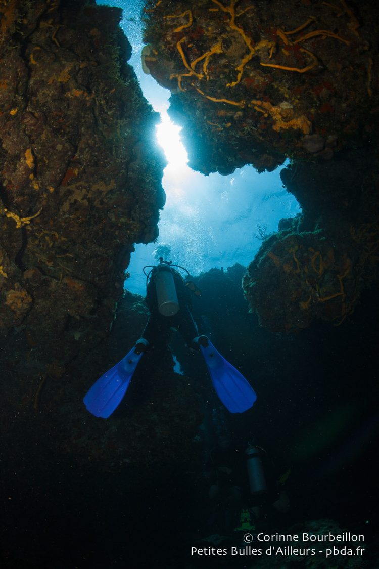 Diving on the reef of Cozumel. Quintana Roo, Mexico, July 2014.