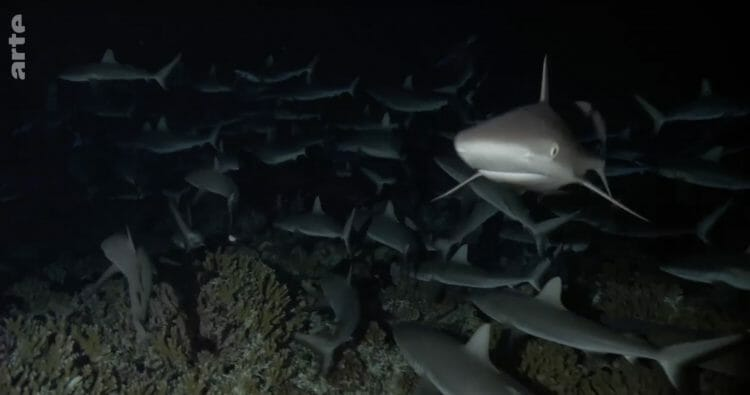 700 requins dans la nuit. (Capture d'écran : Arte.tv)