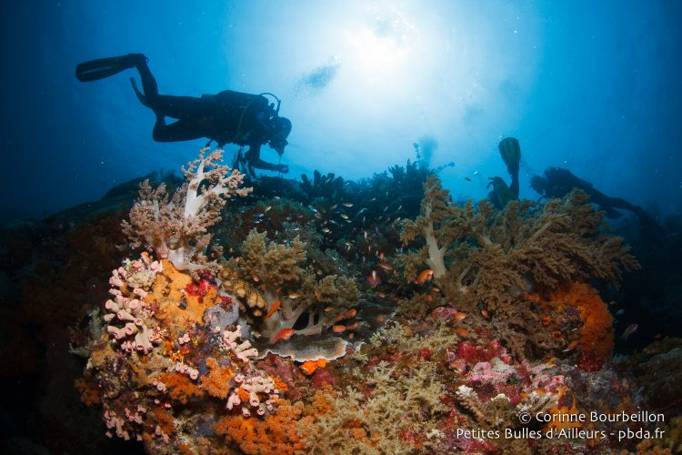 Divers moving above the coral reef. Kurkap Island, Maluku, Indonesia, October 2015.