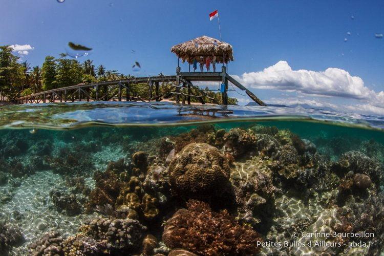 Sous le ponton, le corail. Le ponton de Coral Eye, à Bangka Island. (Bangka, Sulawesi, juillet 2015.)