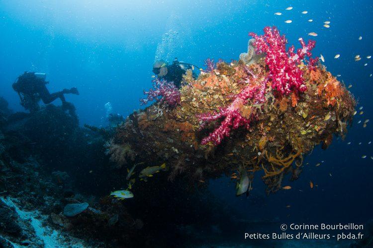 Un coup de flash révèle la couleur du corail au bout de l'aile. (Wai Plane Wreck, Raja Ampat, Papouasie occidentale, Indonésie, novembre 2015.)