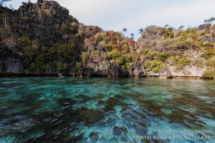 The karst cliffs plunge into the turquoise water. (South Misool, Raja Ampat, West Papua, Indonesia, November 2015.)