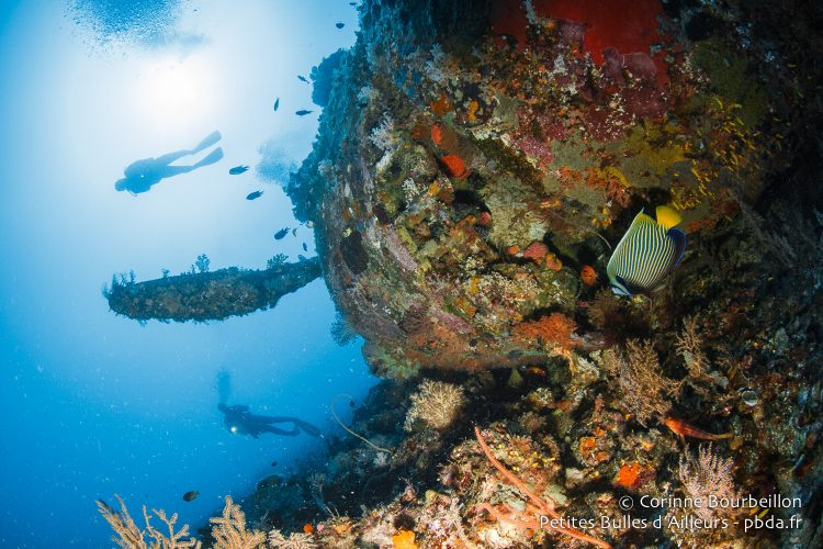 The wreck attracts fish ... and divers. (Wai Plane Wreck, Raja Ampat, West Papua, Indonesia, November 2015.)
