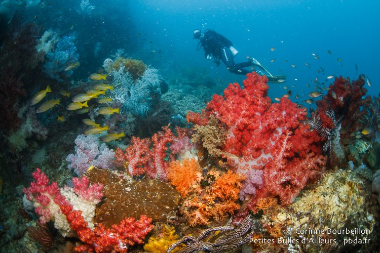 Soft corals proliferate in the waters of Triton Bay. (West Papua, Indonesia, March 2016.)
