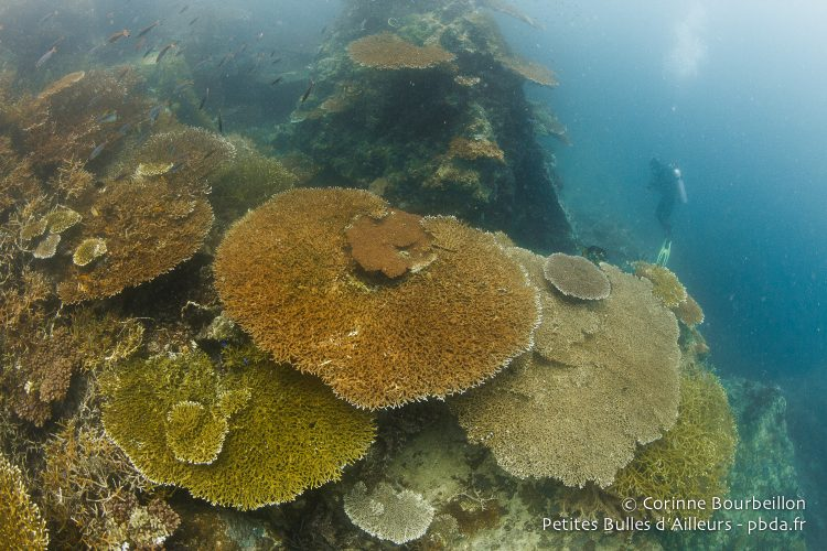 The huge coral tables of Batu Jatuh. (Triton Bay, West Papua, Indonesia, March 2016.)