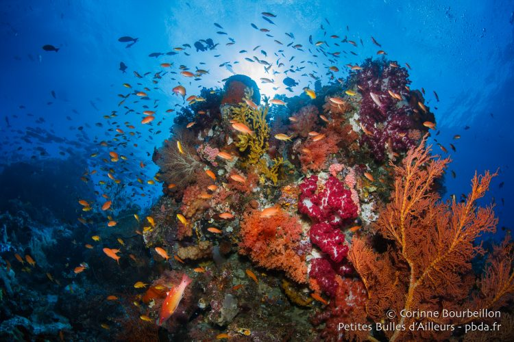 The exuberance of coral in Raja Ampat is always spectacular. (West Papua, Indonesia, July 2016.)
