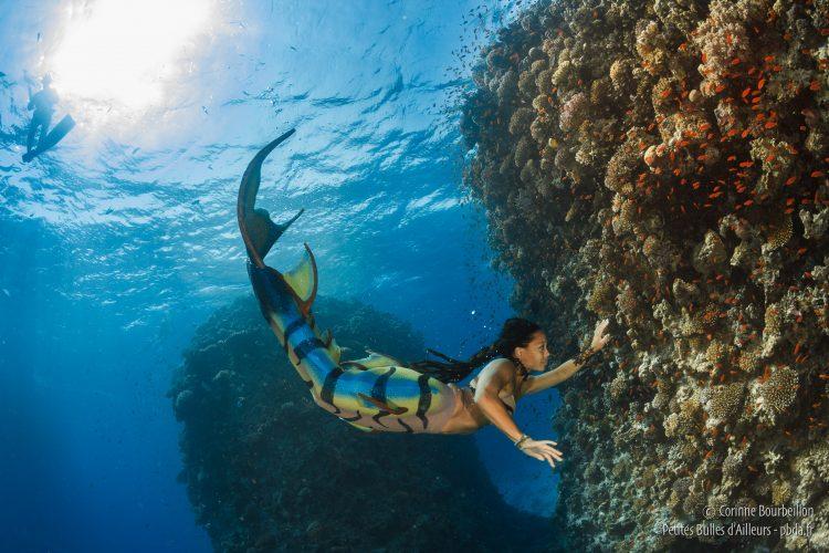 Cindy Guyot, sirène en liberté dans les eaux de la Mer Rouge. (Safaga, Égypte, octobre 2016)