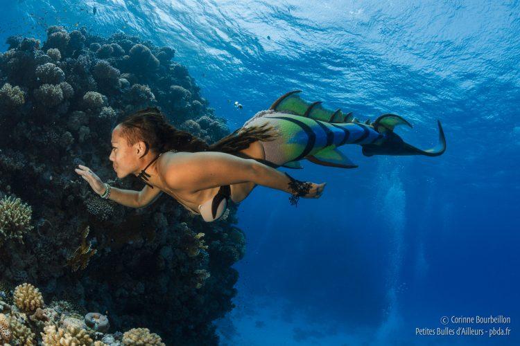 Nager avec une queue de poisson : une impressionnante performance physique... (Mer Rouge, octobre 2016)