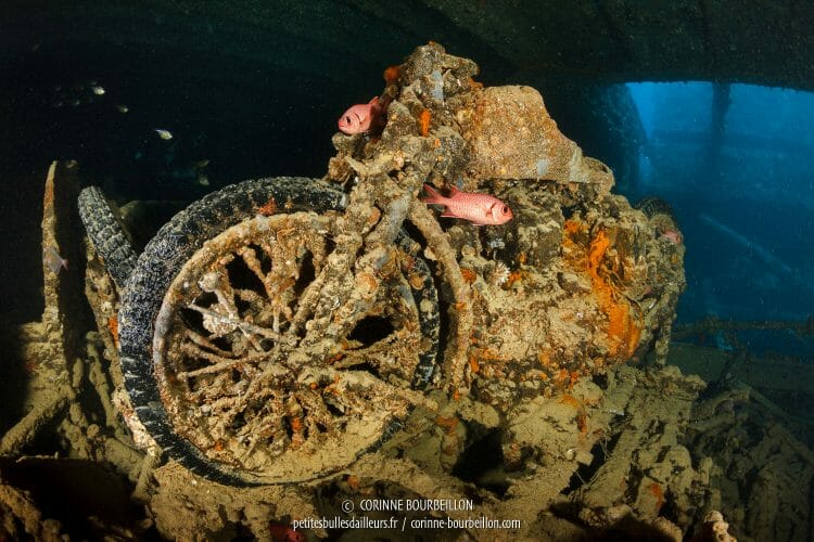 In the Thistlegorm holds, fish have evolved around sunken motorcycles since 1941. (Shaab Ali, Red Sea, Egypt)