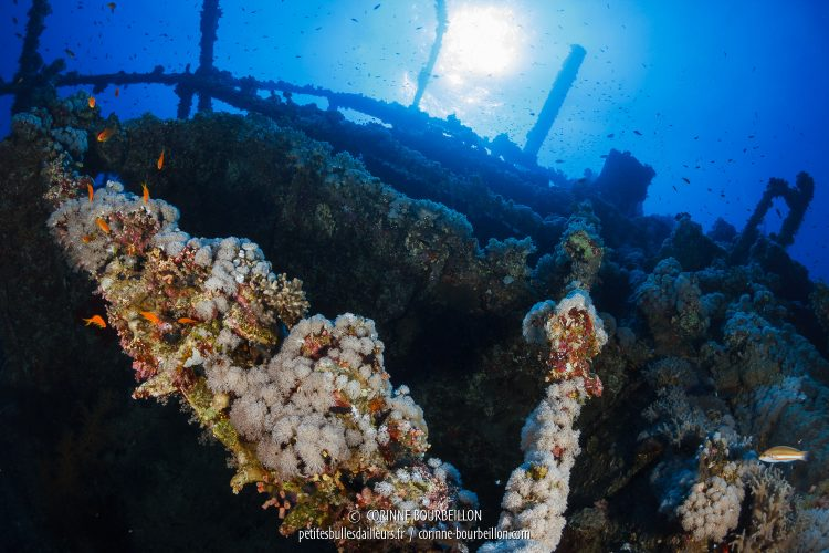 The wreck of Numidia stands against the reef. (Big Brother, Red Sea, Egypt)