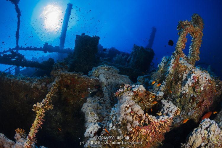 The Numidia, like the other wrecks, has become a gigantic reef conducive to coral life. (Big Brother, Red Sea, Egypt)