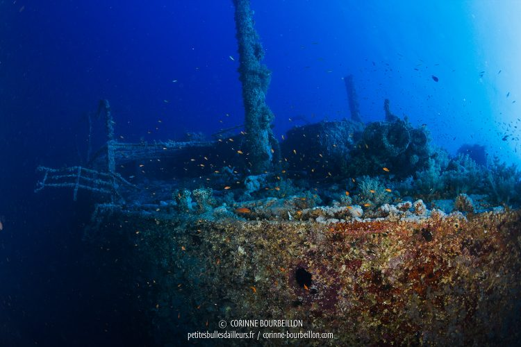 The wreck of Numidia emerges from the blue, like a mysterious ghost ship. (Big Brother, Red Sea, Egypt)