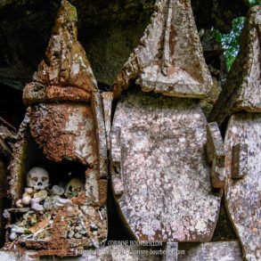 Les tombes suspendues anciennes en bois, rongées par l'humidité, laissent voir les ossements qu'elles contiennent. (Sulawesi, Indonésie, juillet 2007)