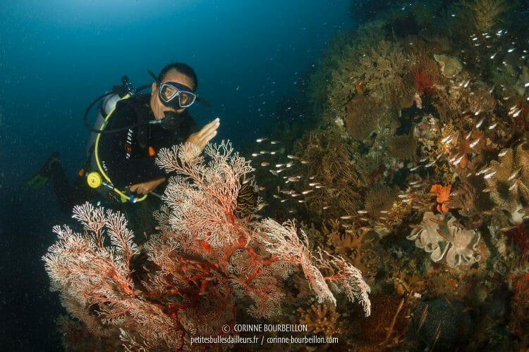 Après cet épisode, Opo a continué à jouer les modèles sous-marins... (Alibaba, Centre-Sulawesi, juillet 2017)