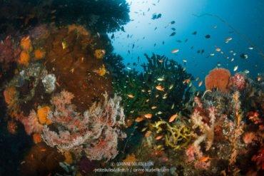Exubérance multicolore au site Entre la Mer 1. (Kampanar, Centre-Sulawesi, juillet 2017)