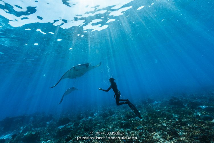 The manta rays come to meet Matt, who has immersed himself in apnea. (Komodo, Indonesia, July 2016)