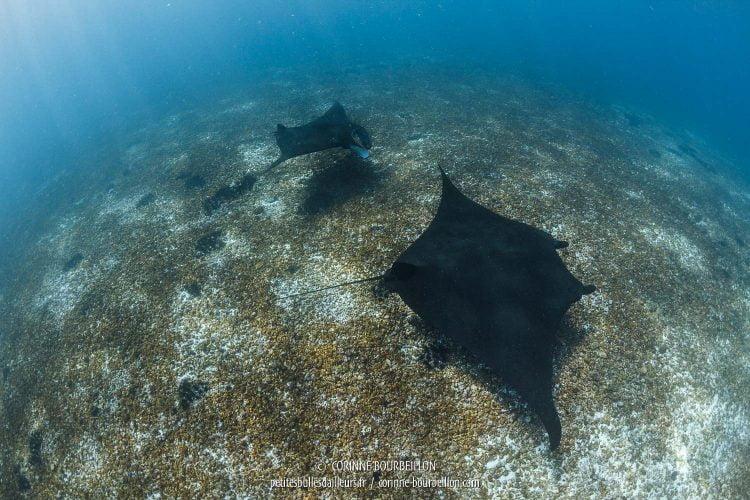 """Sous cet angle, je comprends mieux pourquoi on les appelle aussi """"diables des mers"""". (Komodo, Indonésie, juillet 2016)"""