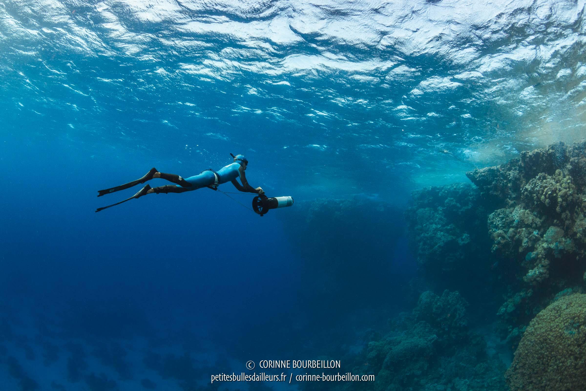 Faire de la plongee en novembre