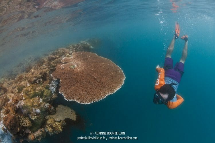 Snorkelling session to observe the coral tables in the waters of Palawan. (Philippines, February 2018)