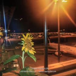 From the sunflower garden at Changi Airport, there is a breathtaking view of the tarmac ... (Singapore, July 2010)