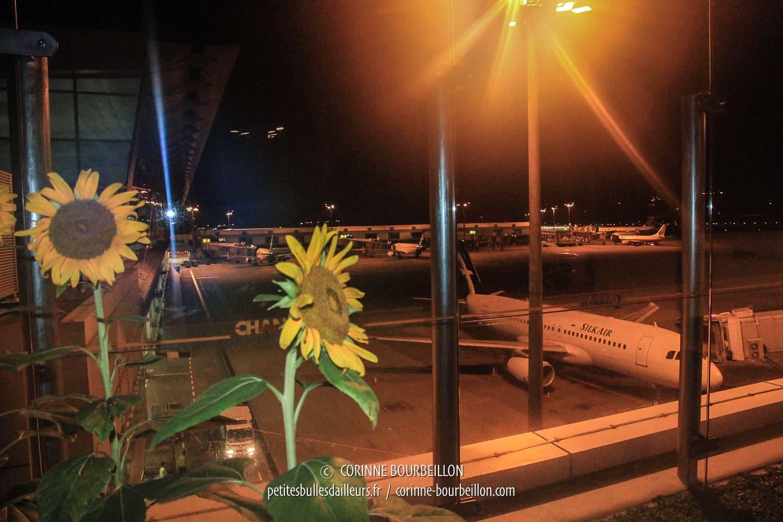 Depuis le jardin des tournesols, à l'aéroport de Changi, on a une vue imprenable sur le tarmac... (Singapour, juillet 2010)
