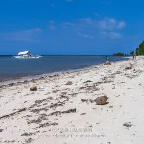Une plage déserte, sans banana boat ni parasol. Les seuls déchets échoués sont des déchets naturels, noix de cocos, algues, bois flottés... (Philippines, Sandugan Beach, Siquijor, février 2008)