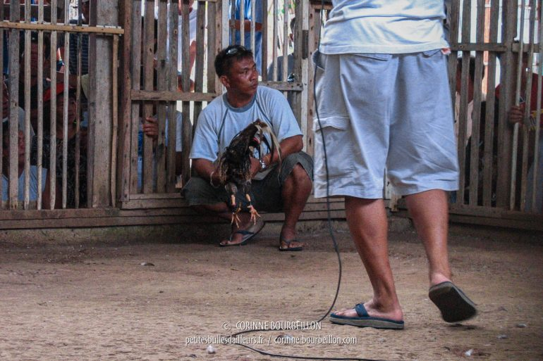 "Between fights, a ""master of ceremonies"" sets the mood at the microphone. (Siquijor, Philippines, February 2008)"