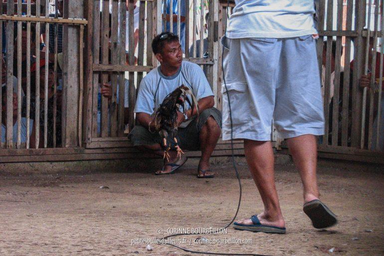 """Entre les combats, un """"maître de cérémonie"""" met l'ambiance au micro. (Siquijor, Philippines, février 2008)"""