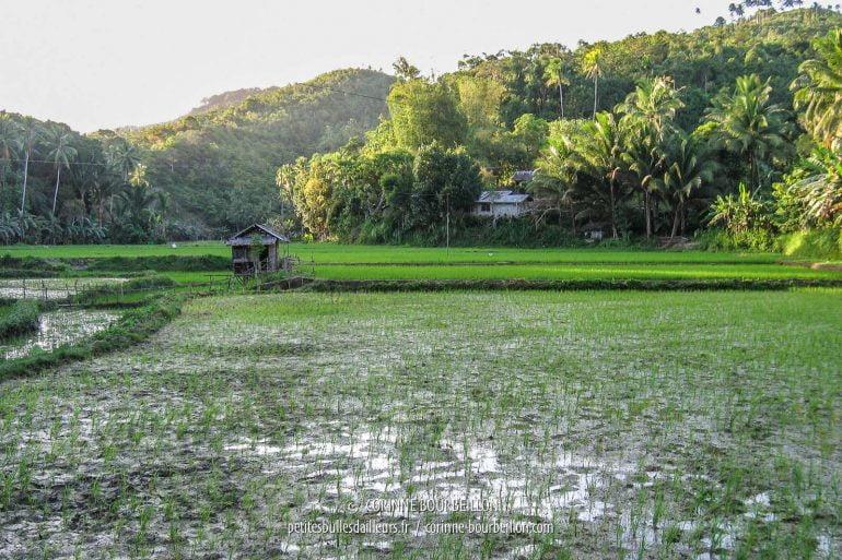 Le long de la route, entre deux montagnes, le vert tendre des jeunes pousses de riz. (Siquijor, Philippines, février 2008)
