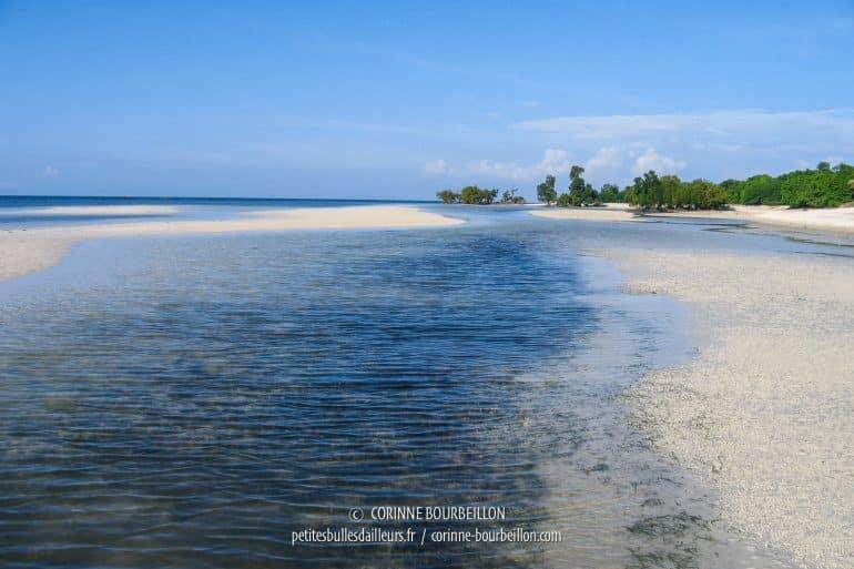 Au fonf, une zone de mangrove. (Sandugan Beach, Siquijor, Philippines, février 2008)