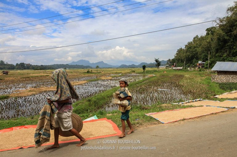 A woman and a young boy are about to bask rice. (Toraja Country, Sulawesi, Indonesia, July 2010)