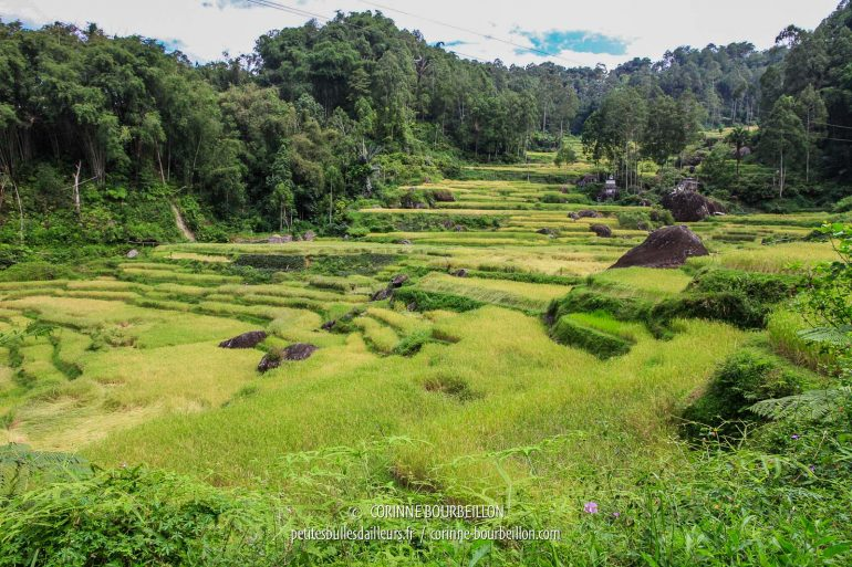 I found the landscape that had remained engraved in my memory: rice terraces, big black rocks ... (Toraja Country, Sulawesi, Indonesia, July 2010)